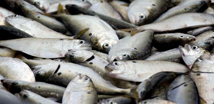 Ways To Increase Your Fish Catches
